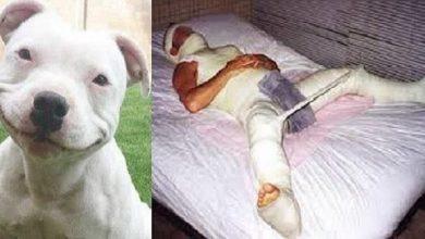 Fake news envolvendo cachorro e homem teve ampla repercussão - Foto/Divulgação